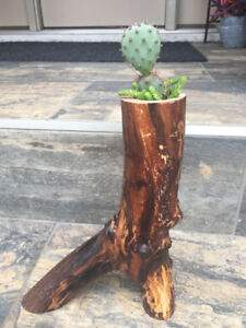 One of a Kind Succulent and Cactus Branch Planter