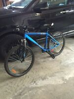 "Miele mountain bike light blue Med 19"" like new Pulse S"