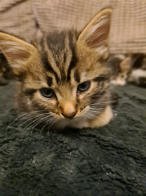 4 bubbly kittens for sale