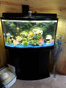 Bow front.. fish tank, complete setup for sale