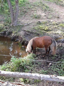 Wanted quite trail horse
