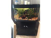 Corner fish tank and stand