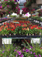 Huge Garden Clearance Sale. EVERYTHING MUST GO !!!!!!!!!!!!!!