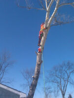 WINTER TREE CUTTING