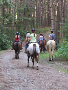 Horse boarding by the Ganaraska Forest Peterborough Peterborough Area image 1
