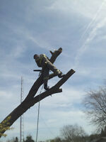 Tree Removal and log milling
