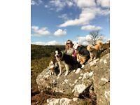 dog walking plymouth & surrounding areas