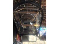 Parrot bird cadge