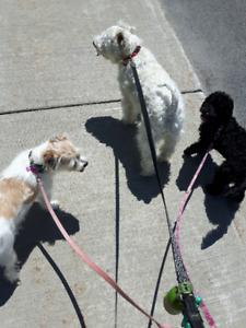 Pension pour chiens Molly, Elsa et cie