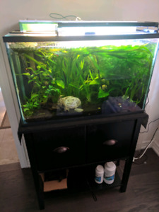 Heavily planted aquarium liquidation