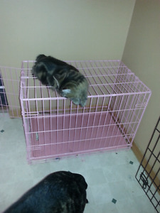 Medium dog kennel up to 40lbs