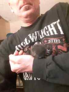 Chinchilla  babies for sale pure breeds black one and gray  one