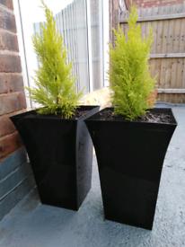 Plant pot plastic black large garden planter conifer 2