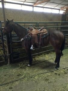 2011 Started heel horse papered