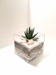 Beautiful Cacti/ succulents/ Air plants Terrariums for SALE.
