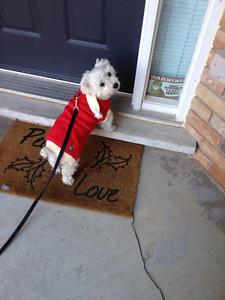 Happy Paws Dog Walking/Pet Sitting Service