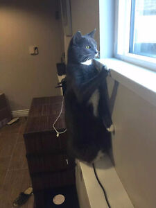 sell two female cats, both two years old and fixed
