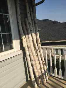Birch Poles/Logs Cambridge Kitchener Area image 2