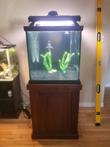 beautiful 60 gallon excellent condition