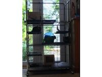 4 beautiful chinchillas and a cage