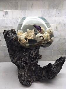 Unique fish tanks