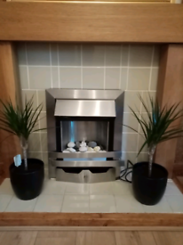 2 lovely indoor plants with new ceramic pots