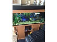 Juwel aquarium 240 ltrs full tropical fish tank set up