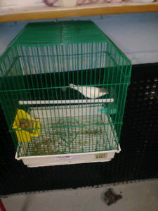 Canary for sale All birds with cages