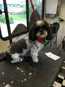 Mobile Dog Grooming Regina Regina Area image 8