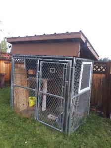dog kennel/chicken coop
