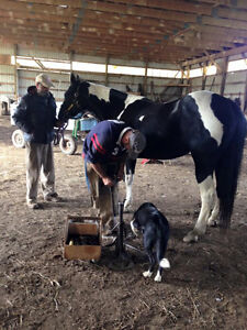 Farrier services,,,   Willing to travel to expand clients base,,