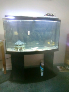 40 gallon bow front tank with everything