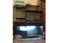 Various Reptiles For Sale