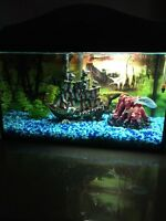 Beautiful 10 gallon aquarium with fish, ornaments and extras