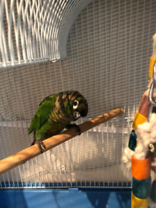 2 Parrots with cage