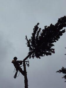 TREE SERVICE  REMOVALS & PRUNING (780) 421-8282 Edmonton Edmonton Area image 3