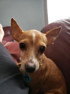 Bell Adoption PENDING - Homes for Paws Dog Rescue