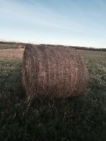 Hay for sale or trade