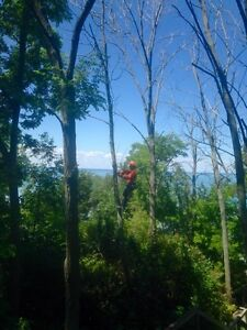 Affordable Tree Trimming and Removal Stratford Kitchener Area image 1