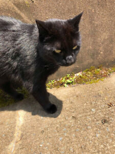Lost Black Cat - Harbourview Apartments