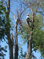 TREE SERVICE, LANDSCAPING, LAWN CARE-CALL KYLE 226-787-6095