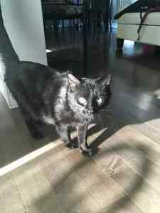 Beautiful Cat Approx. 1.5 yr old. Free