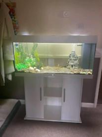 Juwel rio 180 fish tank