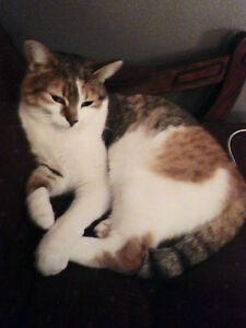 Lost Cat - RENFREW ON