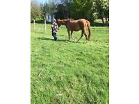 Looking for someone to help with horses