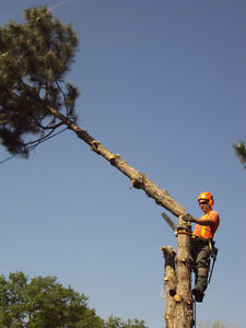 TOP NOTCH TREE SERVICE !!TREE REMOVAL 50% OFF STUMP GRINDING!! London Ontario image 1