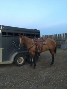5 Year Old Mare for Sale Regina Regina Area image 1