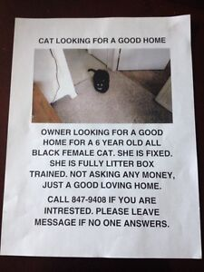Free cat to a loving home