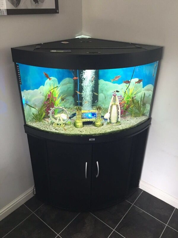 juwel trigon 190 black fish tank in quedgeley gloucestershire gumtree. Black Bedroom Furniture Sets. Home Design Ideas