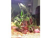 Aquarium plants wanted
